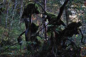 Camouflaged moss creatures by Icemaya