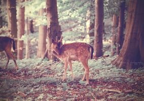 Bambi. by Bunnis