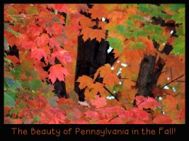 The Beauty of Pennsylvania in the Fall by I-Heart-Photos