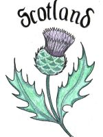 scottish thistle by bevf2003