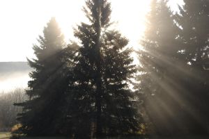 Rays Through Tree by ByronGiant