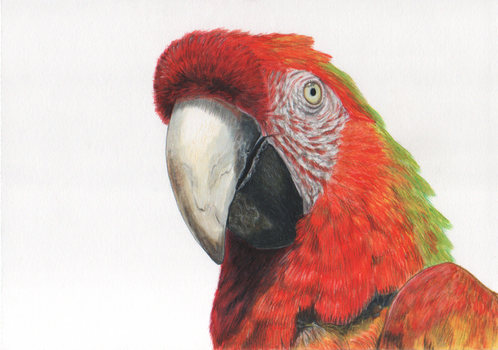 Parrot 2 by Galatea-LE