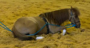 STOCK - 2014 Total Equine Expo-2 by fillyrox