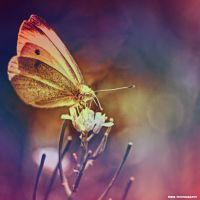 Little Creatures 087 by Frank-Beer
