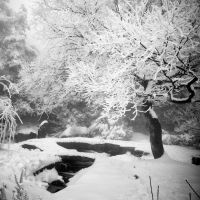 Cold Fairyland by lwc71