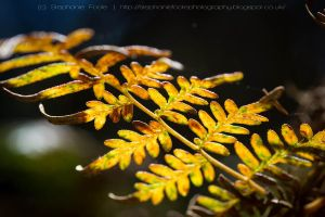 Fern by StephiPhotography