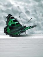 Butterfly Green by fyta