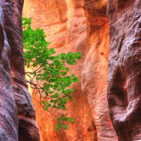 High on the Canyon Wall by ernieleo