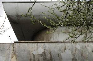 Beton blossom by Pethack