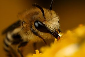 Small Bee 6 by Alliec