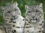 Alex and Niall by Spotted73