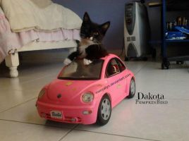 My Kitty driving my Barbie Car by MeiryAllyn