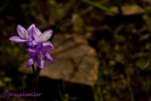 Spring is coming soon by kayaksailor