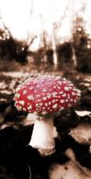 Agaric Magic by graphic-rusty