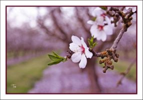 Musings of Spring by TeaPhotography