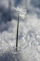 Ice Flower by SenseNet