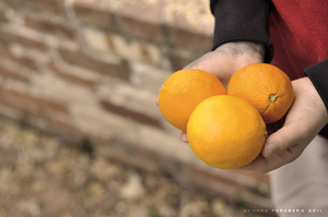 Day 42 - Orange You Glad by Fimrah