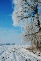 Blue Winter by Inguan