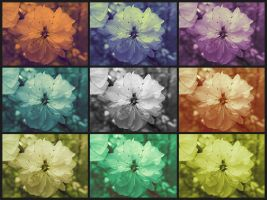 colorful flowers by Didix1122