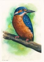 Common Kingfisher by windfalcon