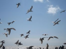 Hastings Seagulls by Rika-strife