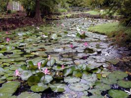 Lily Pad Lake by BabyFae-Stock