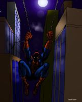 Spider by Night by masuros