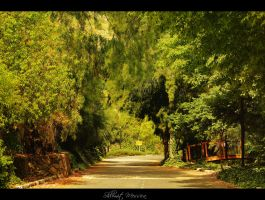 Green path by ShlomitMessica