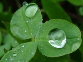 Droplets by shutter-bug-sanna