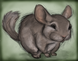 Chinchilla by awesomeoclock