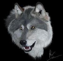 Wolf portrait by RachelWolf