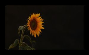 Glowing in the Darkness by XanaduPhotography