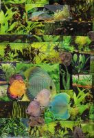 freshwater collage ID by subearanhuman
