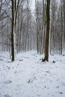 Snowscape Stock 57 by Sed-rah-Stock