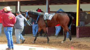 Racehorse Stock 08 by Rejects-Stock
