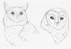 Two Owls by Aydenna
