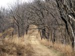Forest Path - Bare by hyenacub-stock