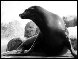 Sealion by Dreamk8
