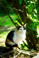 homeless cats 07 by rootkit0