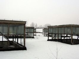snow-covered roofs by w-p