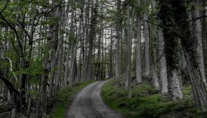 The Lonely Road by JimmySherwood