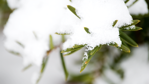 White Needles by rclee21