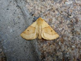 Moth by PetiniBeag