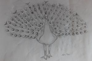 Uncolored Peacock by mrm911