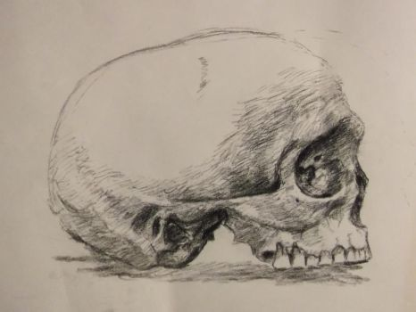 skull 3 by amirem