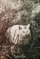 Le Chat Blanc by AngelusNoir