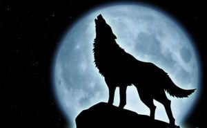 Wolf howling at the moon by hmmmm1797