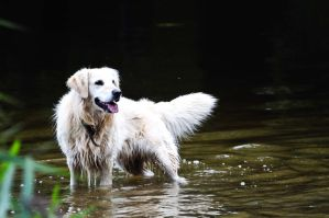 Dog playing in the lake by dynamick