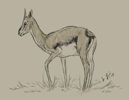 Thomson's Gazelle by Jullelin