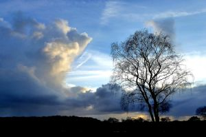 High clouds and tree on the heath by jchanders